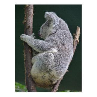 Postal abrazo de la koala