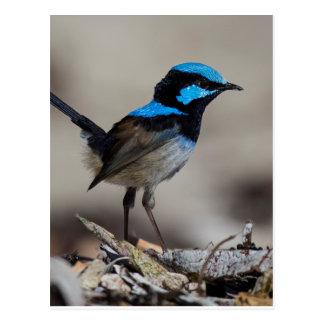 Postal abucheo birdy birdy