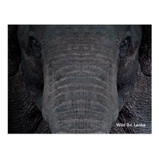 Postal adaptable del elefante de Sri Lanka