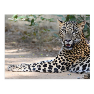 Postal adaptable del leopardo de Sri Lanka