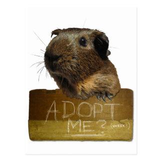 Postal Adopción del rescate del conejillo de Indias