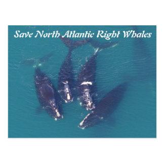 Postal Ahorre las ballenas derechas de Atlántico Norte
