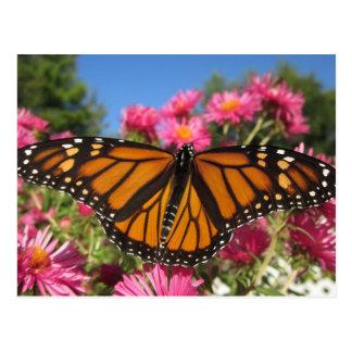 Postal Alas del monarca - mariposa