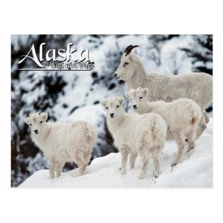 Postal Alaska salvaje y libre