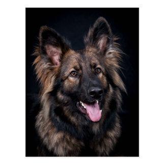 Postal Alsatian lindo del perro de pastor alemán de la