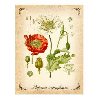 Postal Amapola de opio - ilustracion del vintage