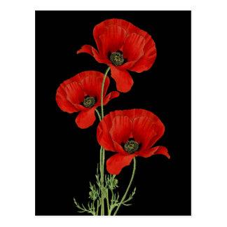 Postal Amapolas rojas del vintage botánicas