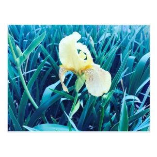Postal amarilla de la primavera