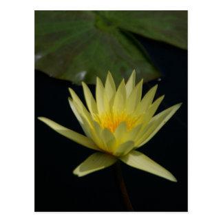 Postal amarilla de Lotus Waterlily