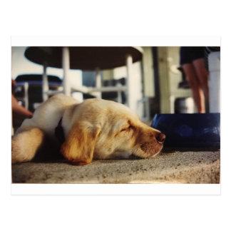 Postal amarilla del perrito el dormir Labrador