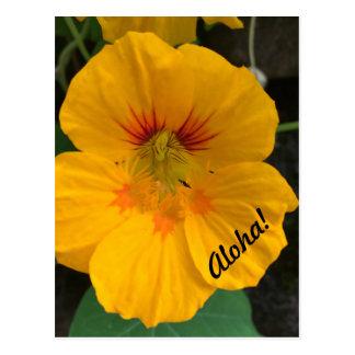 ¡Postal amarilla hawaiana de la flor - hawaiana! Postal