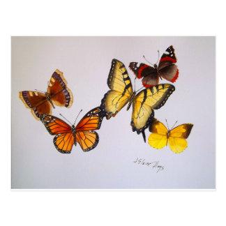 Postal americana de las mariposas