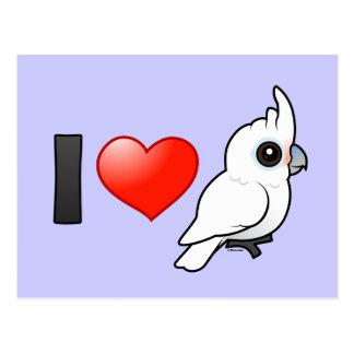 Postal Amo los Cockatoos de Goffin