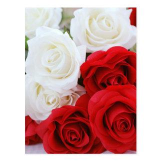 Postal amor rojo blanco de la flor color de rosa de las