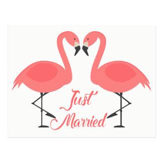 Postal Amor tropical casado rosado del boda del flamenco