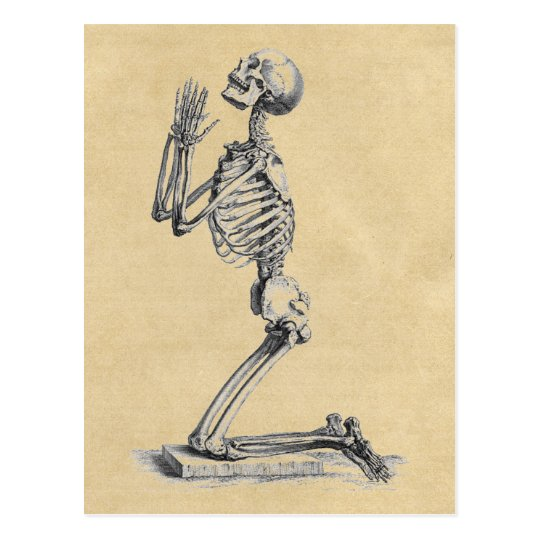 Postal Anatomía de la sepia de los huesos | Zazzle.es