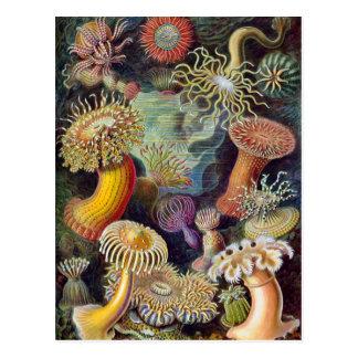 Postal Anémonas de mar subacuáticas del vintage de Ernst