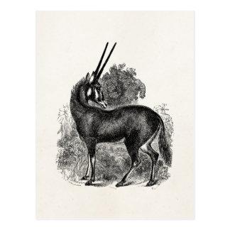 Postal Animales personalizados Gazelle del antílope del