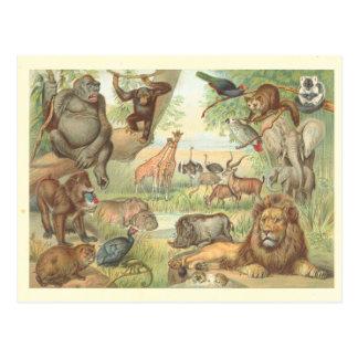 Postal Animales salvajes de África