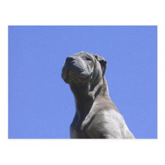 Postal Años del perro…
