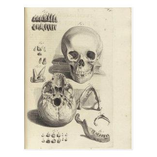 Postal antigua de la anatomía del cráneo de la