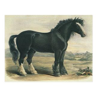 Postal antigua del caballo de proyecto del condado