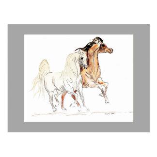 Postal árabe de los caballos