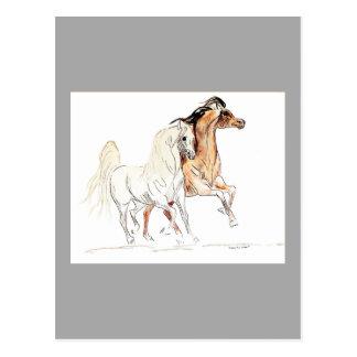 Postal árabe del caballo