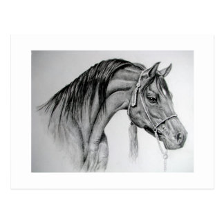 Postal árabe ian del caballo