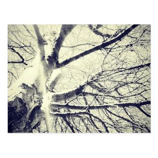 Postal Árbol blanco y negro desnudo