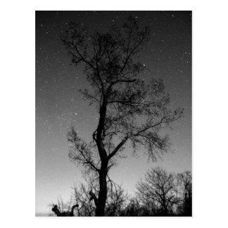 Postal Árbol blanco y negro en la noche