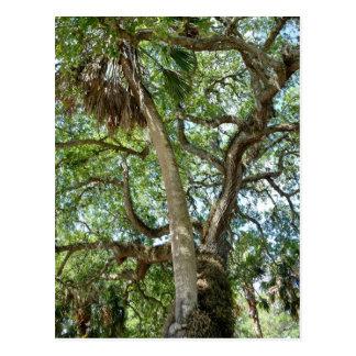 Postal Árbol de amor famoso St Augustine la Florida