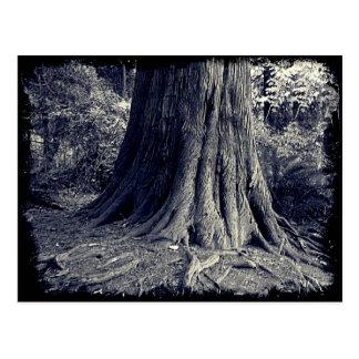 Postal Árbol de las raíces