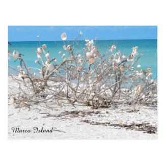 Postal Árbol del Seashell en la isla de Marco