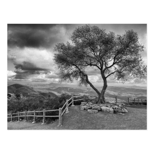 Postal Árbol en la cima de la colina