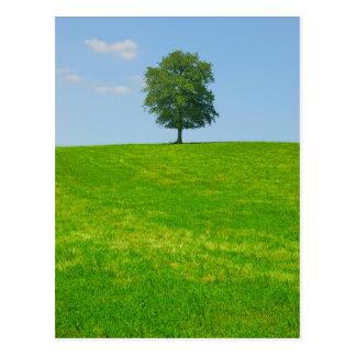 Postal Árbol en un campo
