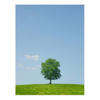 Postal Árbol en un campo 2
