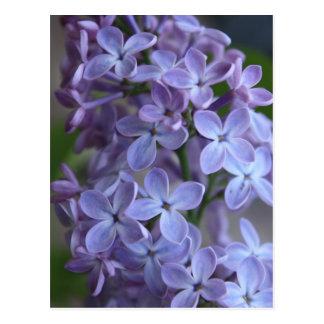 Postal Árbol floral de Lilas en blom