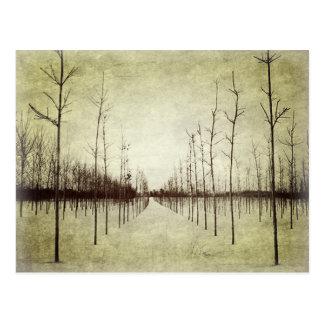 Postal Árbol rural del invierno del paisaje de la pradera