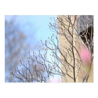 Postal Árbol temprano de la primavera