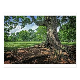 Postal Árbol y raíces antiguos
