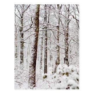 Postal Arbolados Nevado Pocono