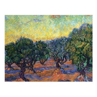 Postal Arboleda verde oliva de Van Gogh con el cielo