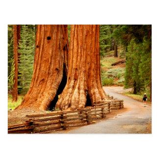 Postal Árboles de la secoya de Yosemite