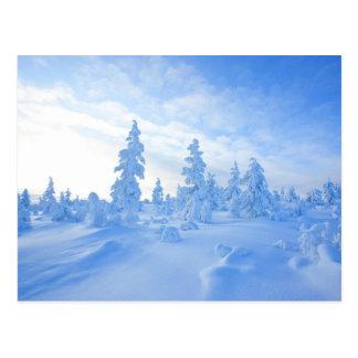 Postal árboles nevosos en Laponia en Finlandia