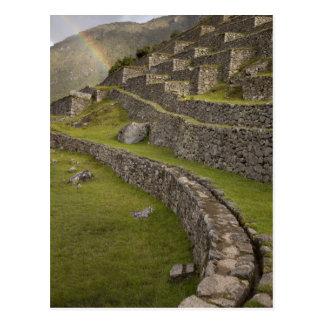 Postal Arco iris sobre las terrazas agrícolas, Machu