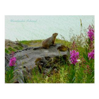 Postal Ardilla por el agua, isla de Parkee de Unalaska