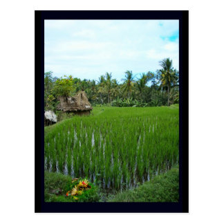 Postal Arroz de arroz, Ubud Bali, Indonesia