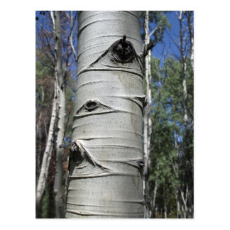 Postal arrugada del árbol de Aspen