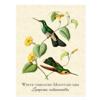 Postal Arte blanco del vintage del colibrí de la gema de